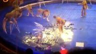 Sirkte aslan dehşeti