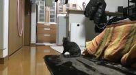Kaleci Kediden müthiş kurtarışlar