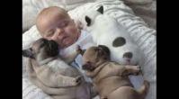 Bebekler ve Köpek Dostları