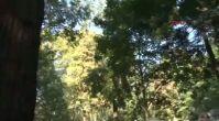 4- Beykoz'da Ağaç Devrildi : 2 Kadın Öldü