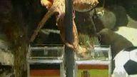 Falcı Ahtapot Bu Kez Yanılır mı