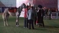 Fatih Sultan Mehmet attan düştü