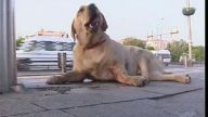 Arabanın çarptığı köpeğin ayakları kırıldı