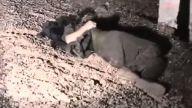 Öldürülen PKK'lının cesedi yol kenarında bulundu
