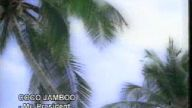 Mr,President - Coco Jamboo.