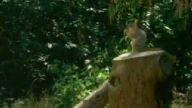 bu sincaplar trafik canavarı.