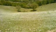 Şeyhresul köyü kavak - samsun