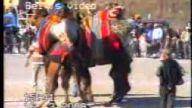 deve güreşi harmandalı erkurt2
