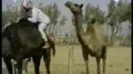 komik hayvanlar -- http://www.oyuncuyuz.biz.tr