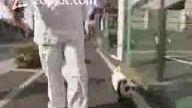 Pandaya Benzeyen Köpek
