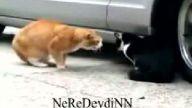 Sevgilisine Fırça Atan Kedi
