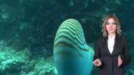 Su altındaki mucize-Nautilus