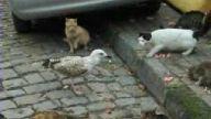 martı -kedi kavgası
