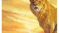 galatasaray aslan gs şampiyon