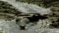 anakonda ve kuş...!!