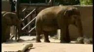 Kafası filin içine kaçtı