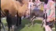 Tüüüü  sana..kızdırmayın deve oğlu deveyi:)))