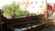 Maymunların havuz keyfi