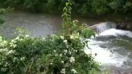 Sakin akan nehir bir anda azgın akışa dönüştü