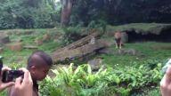 Singapur hayvanat bahçesinde aslan besleme