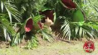 Etçil bitki şakası