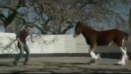 At ile insanın mükemmel dostluğu