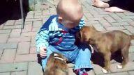 Yavru köpeklerle öpüşen bebek