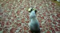 Kedi kendisinden geçti