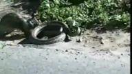 yılanın ınanılmaz yasam savası