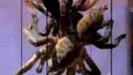 tarantula kızartması yıyen ınsanlar