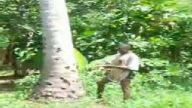 çıplak ayakla dev ağaç tırmanışı