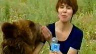 Ayı, yayında muhabir kadına saldırdı!