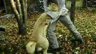 kangal ve öner öner kangalı boğdu :)
