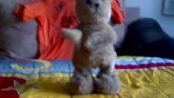 ayılar bile anladı sarı kanaryalar anlamadı :))