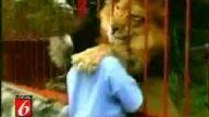 Bu aslan bu çocuğu çok sevdi
