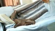 tatlı köpek ve uykı anı