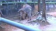 Zebra ile Gergadan'ın Diyoloğu:))