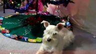 Hayvanlardan Jingle Bells Şarkısı