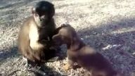 Maymun İle Köpeğin Komik Arkadaşlığı:))