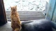Kedi ile Ayı'nın Dostluğu :))