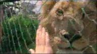 Aslan ile dostluk