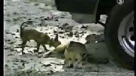 Bu Köpekler Çok Komik:)