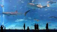 Dünyanın en büyük ikinci akvaryumu