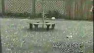 köpeği çıldırtan dolu yağması:)