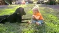 bebeğin köpekle şakalaşması