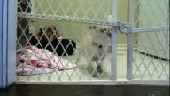 köpekler kafesten kaçmaya çalışırsa