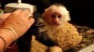 Duş alan maymun