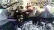 kangal köpeklerinin kurt avı