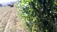 manca köyünden sılaj yapımı