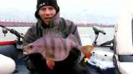 rekor levrek balığı